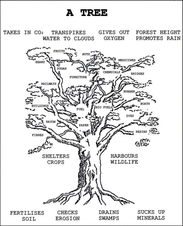 Woodcroft Wildspace  Tree Diagram